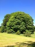 δρύινο δέντρο εικονογράφων μορφής 8 πρόσθετο eps Στοκ Εικόνα