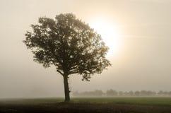 Δρύινο δέντρο το φθινόπωρο Στοκ Φωτογραφία