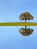 δρύινο δέντρο φθινοπώρου Στοκ φωτογραφίες με δικαίωμα ελεύθερης χρήσης