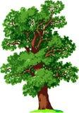 δρύινο διάνυσμα δέντρων Στοκ Εικόνες