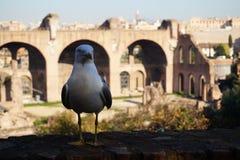 Ρώμη, Ιταλία - 8 Δεκεμβρίου 2016: Αυτοκρατορικά φόρουμ στοκ φωτογραφίες