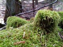 Σάβανο πράσινου Στοκ φωτογραφίες με δικαίωμα ελεύθερης χρήσης