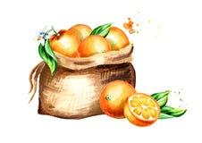 Σάκος των πορτοκαλιών Συρμένη χέρι απεικόνιση Watercolor, που απομονώνεται στο άσπρο υπόβαθρο διανυσματική απεικόνιση