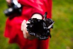 Σάλπιγγες των νεκρών μανιταριών Στοκ Φωτογραφίες