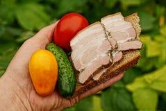 Σάντουιτς με το κρέας και το ψωμί και φρέσκα λαχανικά στο φοίνικα Στοκ Εικόνα