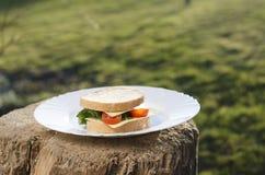 Σάντουιτς στο πιάτο και το πράσινο υπόβαθρο Στοκ εικόνες με δικαίωμα ελεύθερης χρήσης