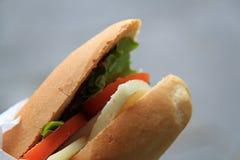 Σάντουιτς τυριών Pecorino Στοκ φωτογραφίες με δικαίωμα ελεύθερης χρήσης
