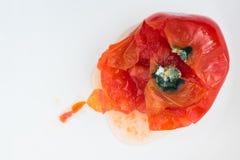 Σάπια ντομάτα από τους μύκητες και η φόρμα που χαλά στο άσπρο υπόβαθρο Ακατάλληλη αποθήκευση των λαχανικών στοκ εικόνες