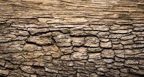 Σάπια ξύλινη σύσταση Στοκ Εικόνες