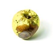 Σάπια φρούτα Apple που απομονώνεται στο άσπρο υπόβαθρο Στοκ Εικόνες