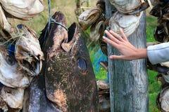 Σάπιες προσφορές τροφίμων στοκ φωτογραφίες