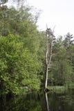 σάπιο δέντρο Στοκ φωτογραφία με δικαίωμα ελεύθερης χρήσης