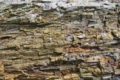 σάπιο δέντρο Στοκ Εικόνες