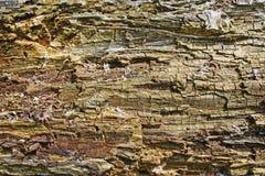 σάπιο δέντρο Στοκ φωτογραφίες με δικαίωμα ελεύθερης χρήσης