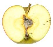 Σάπιο μήλο Στοκ Φωτογραφίες