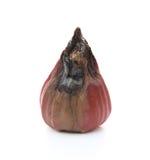 Σάπιο μήλο κεριών στο λευκό Στοκ Φωτογραφίες