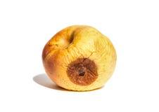 Σάπιο μήλο στο λευκό Στοκ Εικόνες