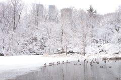 Σέντραλ Παρκ πόλεων της Νέας Υόρκης το χειμώνα Στοκ Φωτογραφία