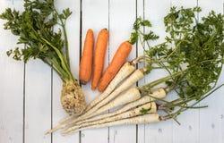 Σέλινο, καρότο και μαϊντανός Στοκ Εικόνες