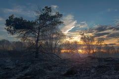 Σήμερα ραδιενεργός τέφρα Στοκ φωτογραφία με δικαίωμα ελεύθερης χρήσης