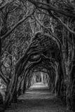 Σήραγγα δέντρων σε B&W Στοκ εικόνα με δικαίωμα ελεύθερης χρήσης