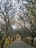 Σήραγγα δέντρων Στοκ Εικόνα