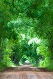 Σήραγγα δέντρων, Khao Kho Στοκ Εικόνα