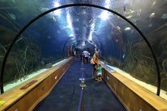 Σήραγγα γυαλιού στο oceanarium Στοκ φωτογραφία με δικαίωμα ελεύθερης χρήσης