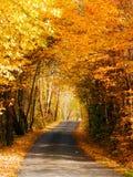 Σήραγγα και δρόμος δέντρων Στοκ Φωτογραφίες