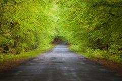 σήραγγα οδικών δέντρων Στοκ φωτογραφία με δικαίωμα ελεύθερης χρήσης
