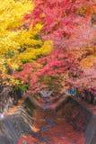 Σήραγγα Momiji διαδρόμων σφενδάμνου στην εποχή φθινοπώρου σε Kawaguchi, Ja Στοκ φωτογραφία με δικαίωμα ελεύθερης χρήσης