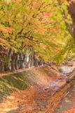 Σήραγγα Momiji διαδρόμων σφενδάμνου στην εποχή φθινοπώρου σε Kawaguchi, Ja Στοκ Φωτογραφίες