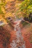 Σήραγγα Momiji διαδρόμων σφενδάμνου στην εποχή φθινοπώρου σε Kawaguchi, Ja Στοκ φωτογραφίες με δικαίωμα ελεύθερης χρήσης