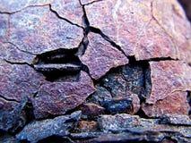 σίδηρος που ξεπερνιέται Στοκ Φωτογραφίες