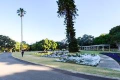 ΣΊΔΝΕΪ - 12 Οκτωβρίου: Βασιλικός βοτανικός κήπος του Σίδνεϊ στις 12 Οκτωβρίου 2017 στο Σίδνεϊ Στοκ εικόνα με δικαίωμα ελεύθερης χρήσης