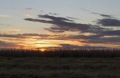Σίκαλη στο ηλιοβασίλεμα στοκ εικόνες