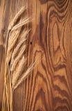 Σίκαλη στο ξύλο στοκ εικόνα