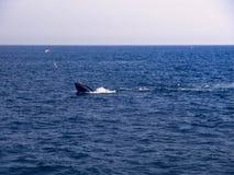 Σίτιση αφρού φαλαινών Humpback Στοκ Εικόνες