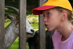 σίτιση ζώων Στοκ Φωτογραφίες