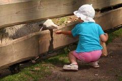 σίτιση ζώων Στοκ φωτογραφία με δικαίωμα ελεύθερης χρήσης