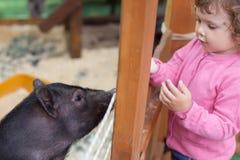 Σίτιση κοριτσιών μικρών παιδιών χαριτωμένη λίγος χοίρος στο αγρόκτημα Στοκ εικόνα με δικαίωμα ελεύθερης χρήσης