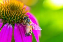 σίτιση μελισσών Στοκ Φωτογραφίες