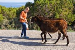 Σίτιση νεαρών άνδρων άγριοι γάιδαροι από το χέρι Άγρια φύση, θηλαστικά, ζώα και έννοια φύσης Στοκ Φωτογραφίες