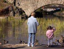 σίτιση παπιών Στοκ Φωτογραφίες