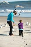 σίτιση πουλιών παραλιών Στοκ φωτογραφία με δικαίωμα ελεύθερης χρήσης
