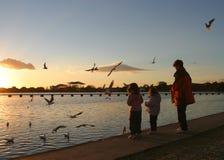 σίτιση πουλιών Στοκ Εικόνες
