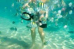 Σίτιση των ψαριών στοκ εικόνες