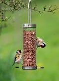 σίτιση goldfinches Στοκ εικόνα με δικαίωμα ελεύθερης χρήσης