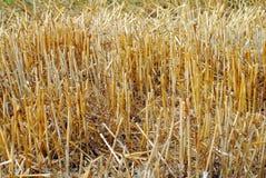 σίτος αχύρου πεδίων Στοκ φωτογραφία με δικαίωμα ελεύθερης χρήσης