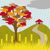 σίτος δέντρων βροχής φθιν&omicron Στοκ Φωτογραφία